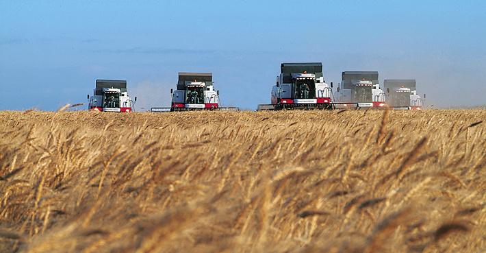 Россия ставит целую серию рекордов в сельском хозяйстве