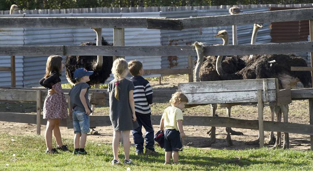 Госдума утвердила единые требования к организации детского отдыха