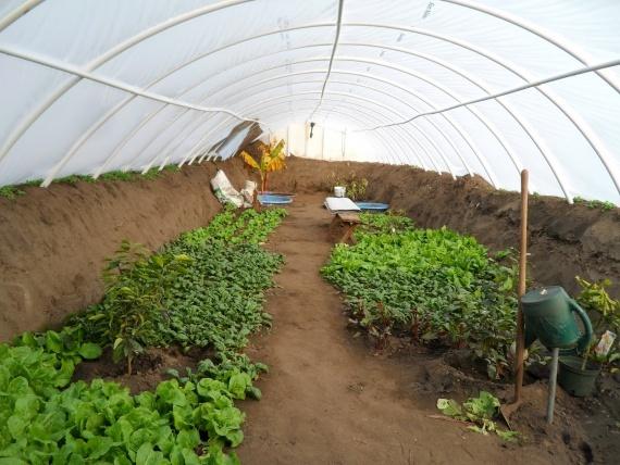 35 подземных теплиц для круглогодичного выращивания