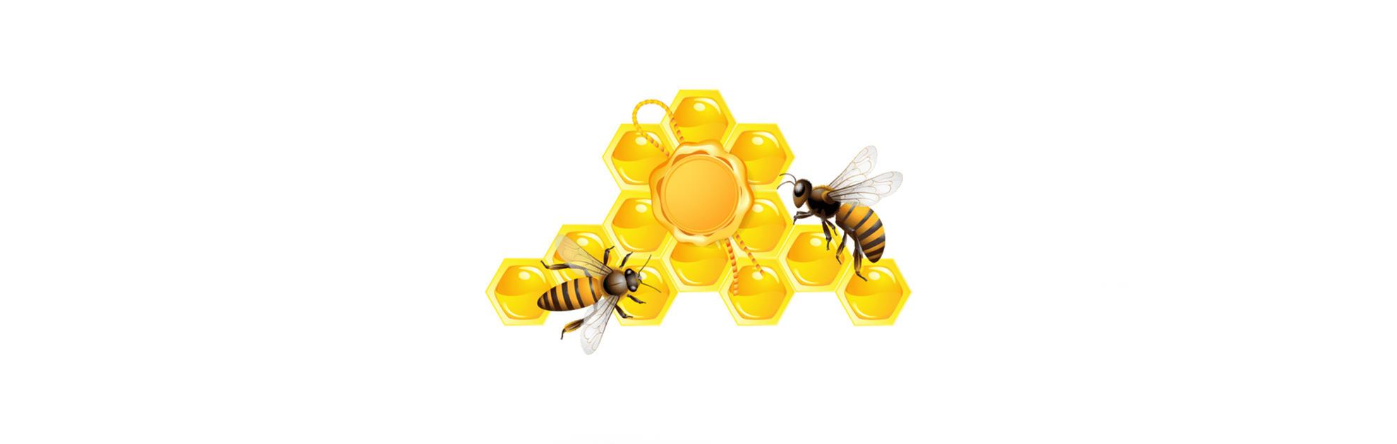 О пчелах, папе и двойной радуге