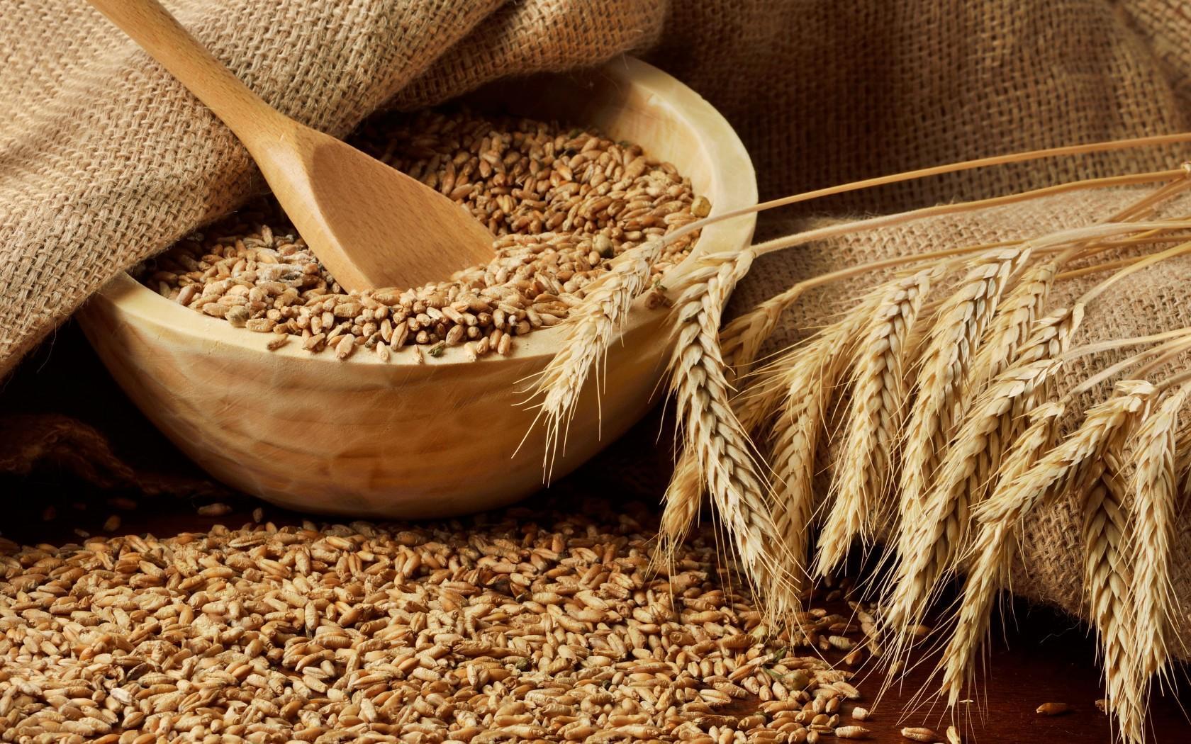 Фига гегемону: в Сирии создадут крупнейший хаб по экспорту российского зерна